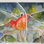 Underwater Shrimp